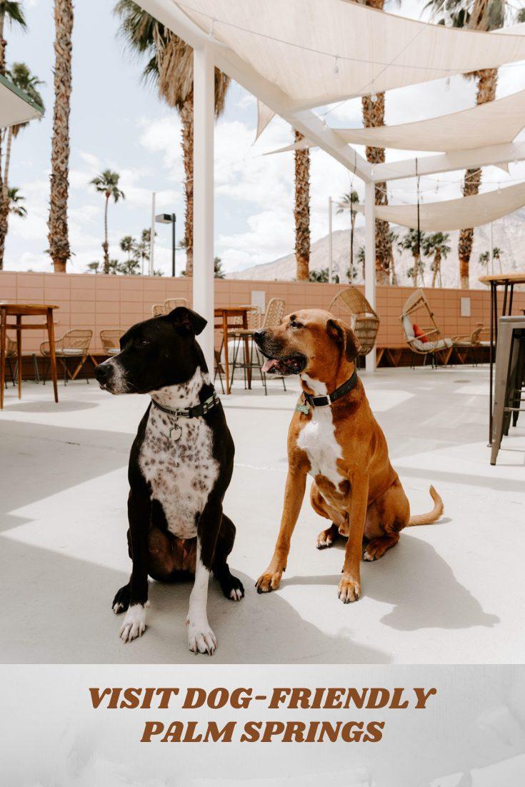 Dog-friendly Palm Springs pin