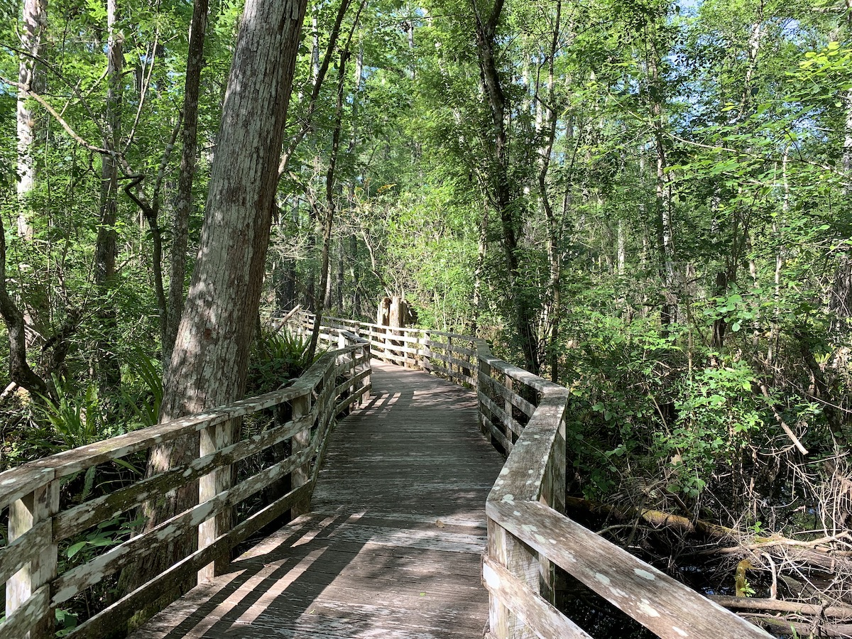 Best outdoor activities in Naples: Boardwalk provides a trail to take you through Audubon's Corkscrew Swamp Sanctuary
