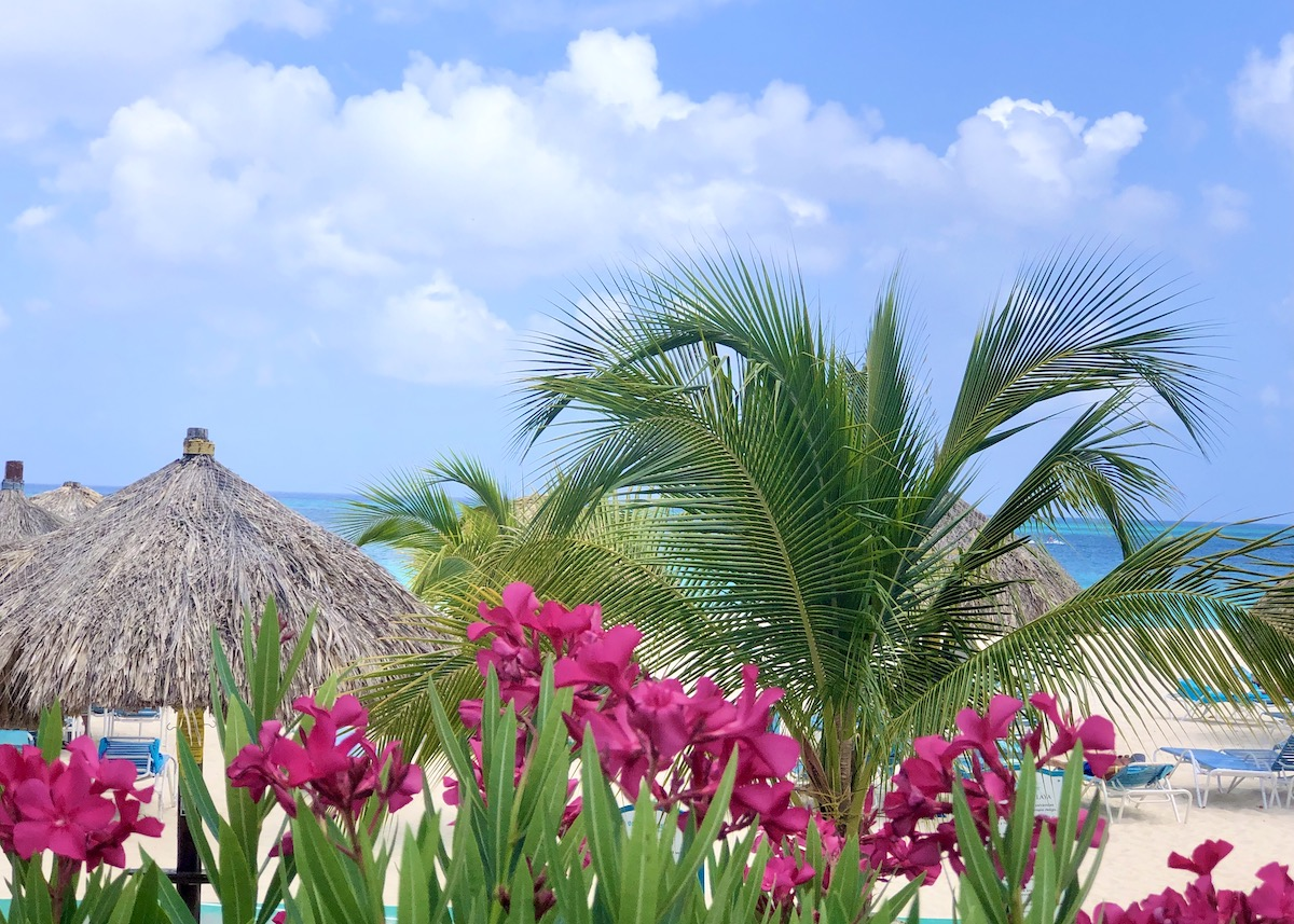 Red flowers, palm trees, and thatched rooves on Aruba