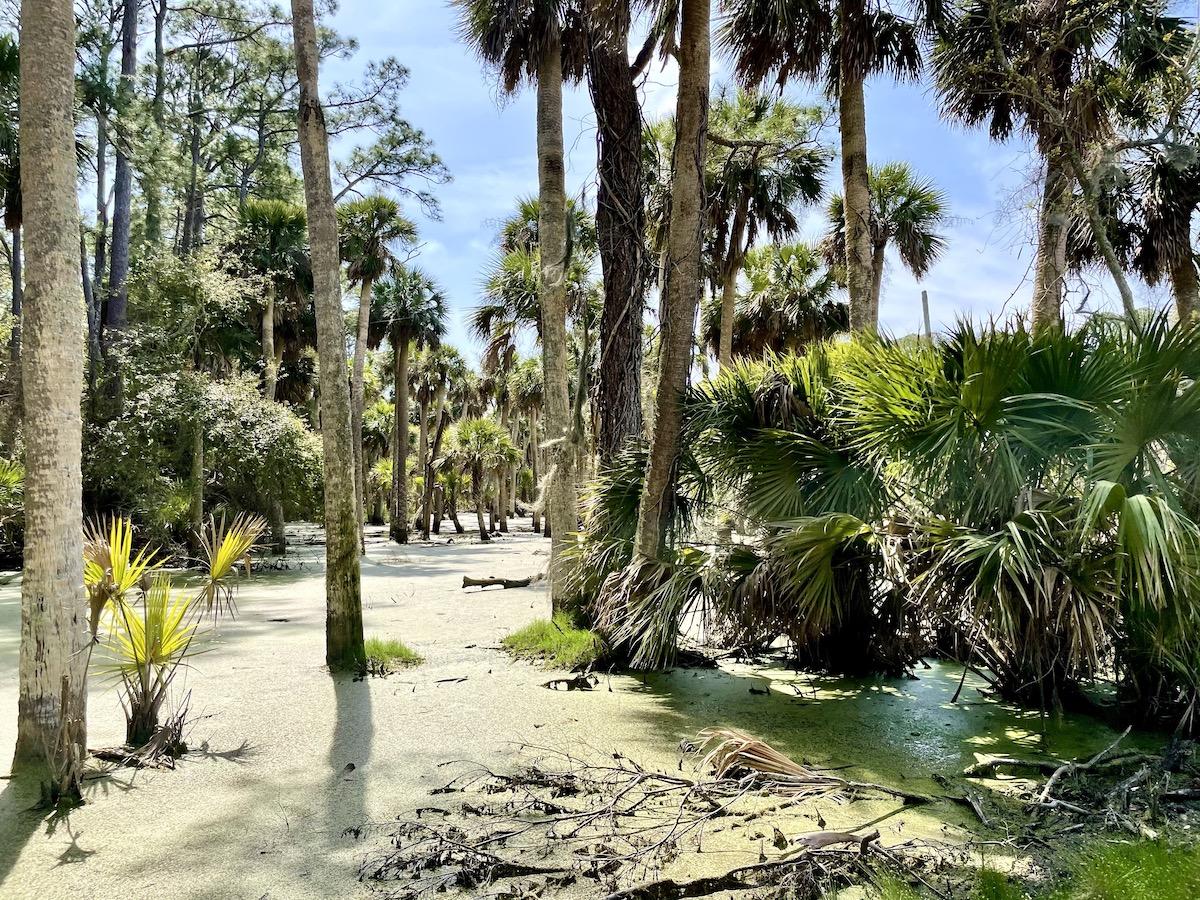 Mesmerizing and photo-worthy swamps along the drive (credit: Gwen Pratesi)