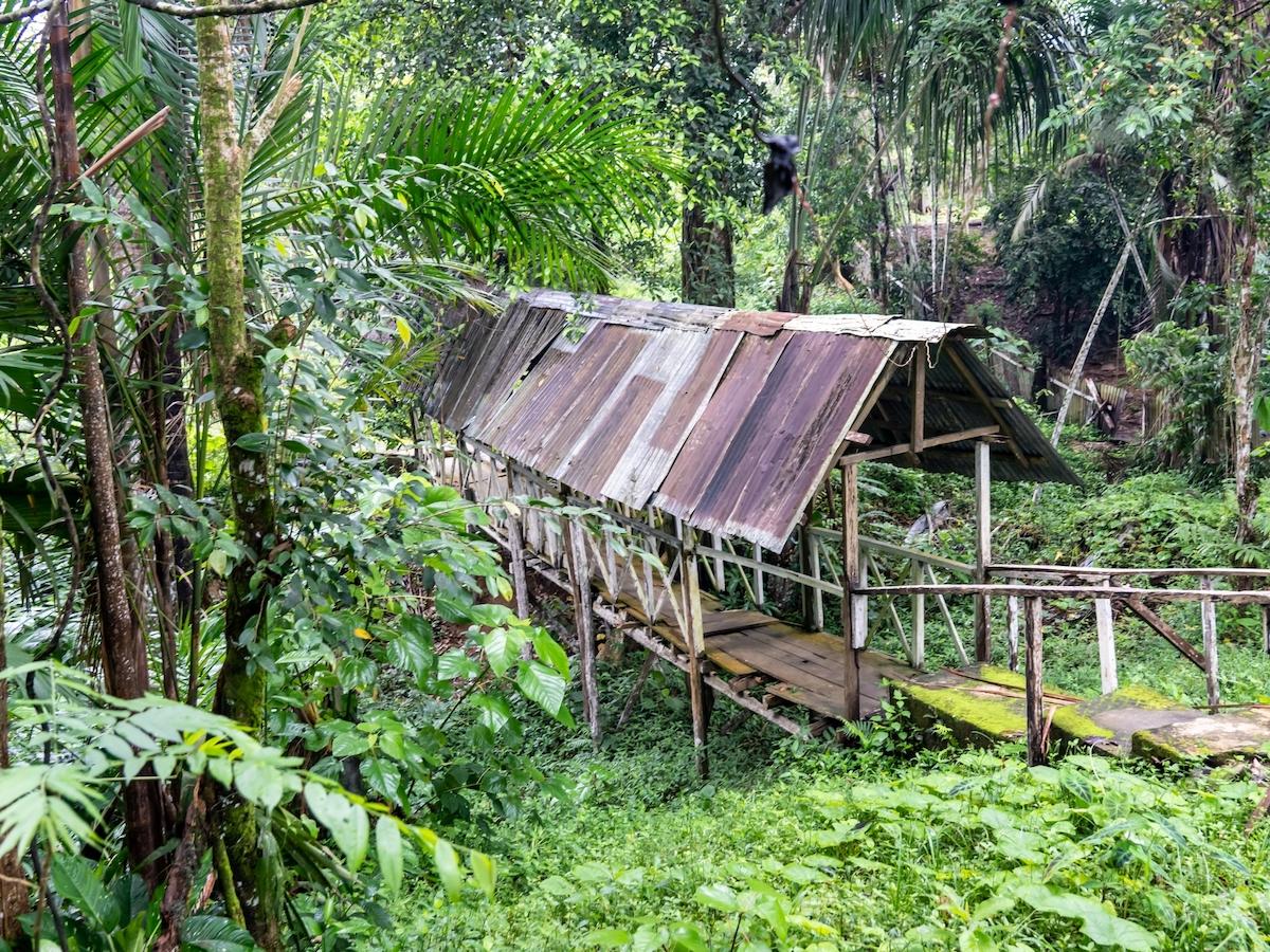 Rainforest in Pevas